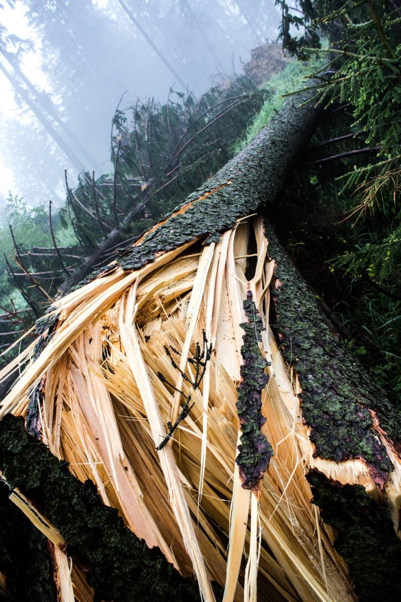 Výsledek obrázku pro lesy kalamita